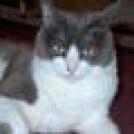 Chriscat