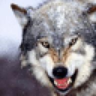wolf59