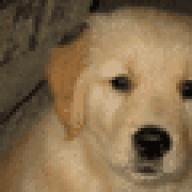 shepdog1