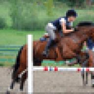 lovehorses14