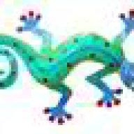 gekkota