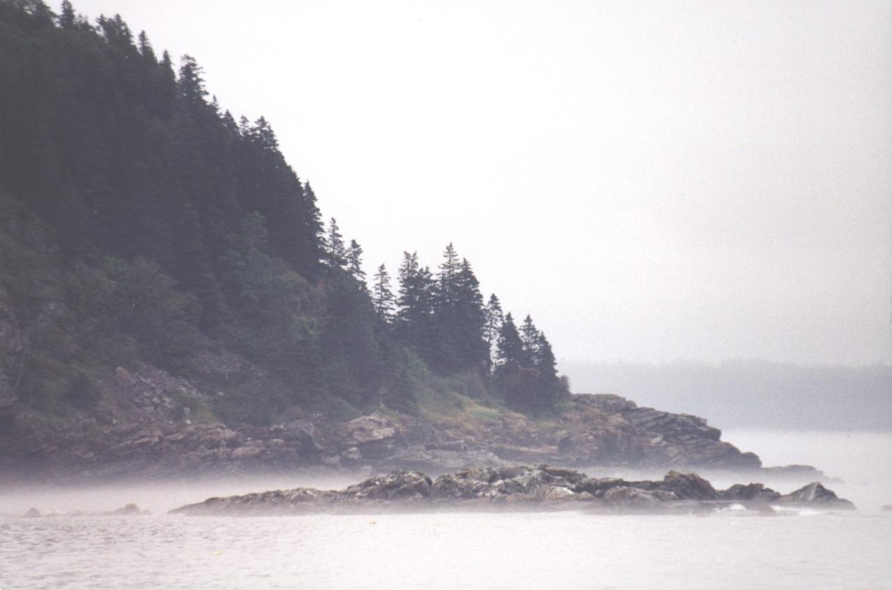 Maine Coastlibe- Fog