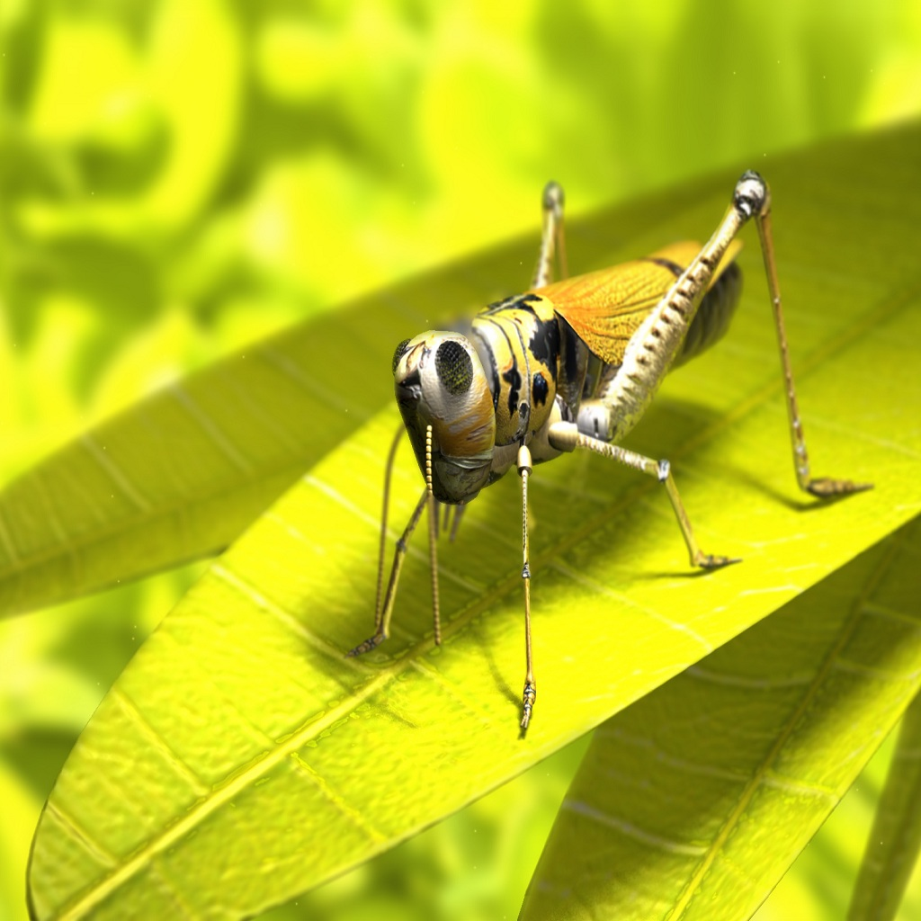 wallpaper_grasshopper