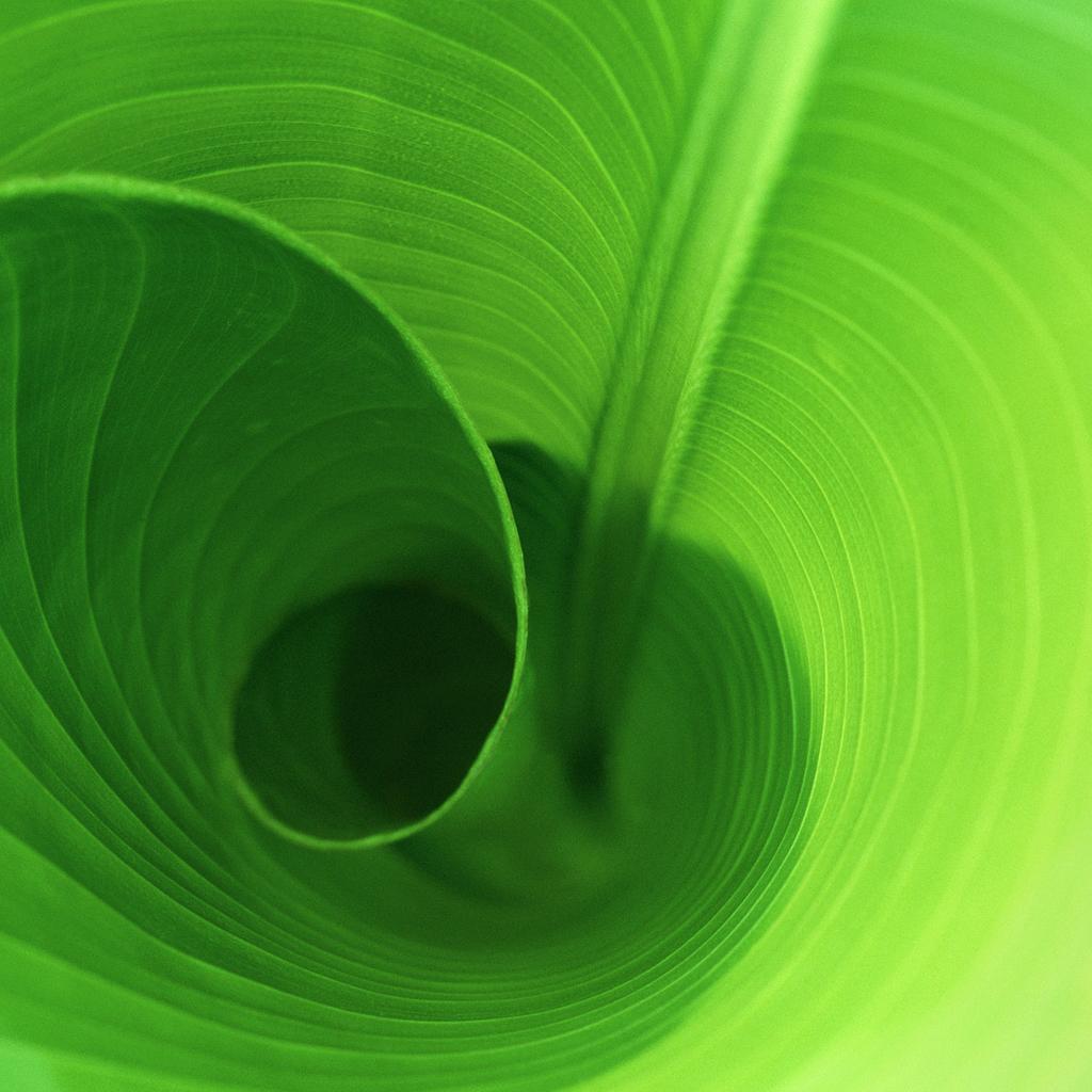 Leaf_Curl