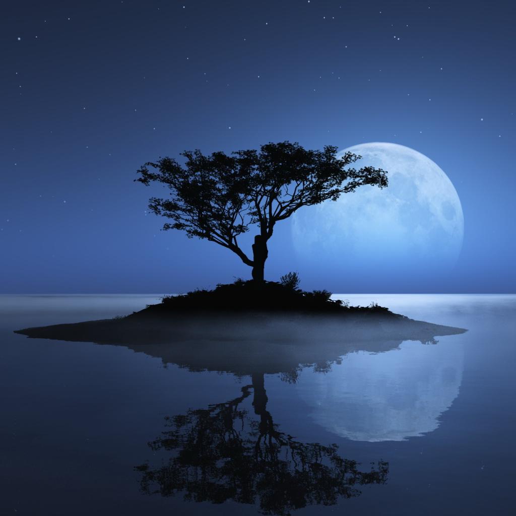 tree_night